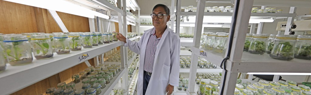 Dr. Pablito Magdalita shows one of the papaya trees among the numerous crops outside his laboratory at the Institute of Plant Breeding. (Photo by Misael Bacani, UP MPRO)