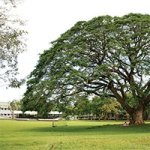 Fertility tree at UPLB