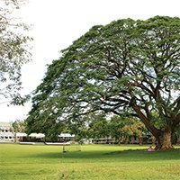 Fertility tree at UPLB