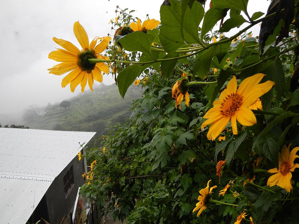 Foggy view of Tuba, Benguet Town Proper. Photo by Ramon FVelasquez, taken 29 November 2013 (Photo from Wikicommons, https://commons.wikimedia.org/wiki/File:Tuba,Benguetjf0090_07.JPG)