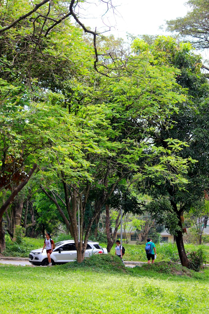 The UP Los Baños central turfs, aptly named Freedom Park; a biker whizzing by the greenery of a major UP Diliman avenue, and students walking to and from PE classes at the UP Diliman Gymnasium. (Photos by Misael Bacani (first) and Jo. Lontoc (second and third), UP MPRO)