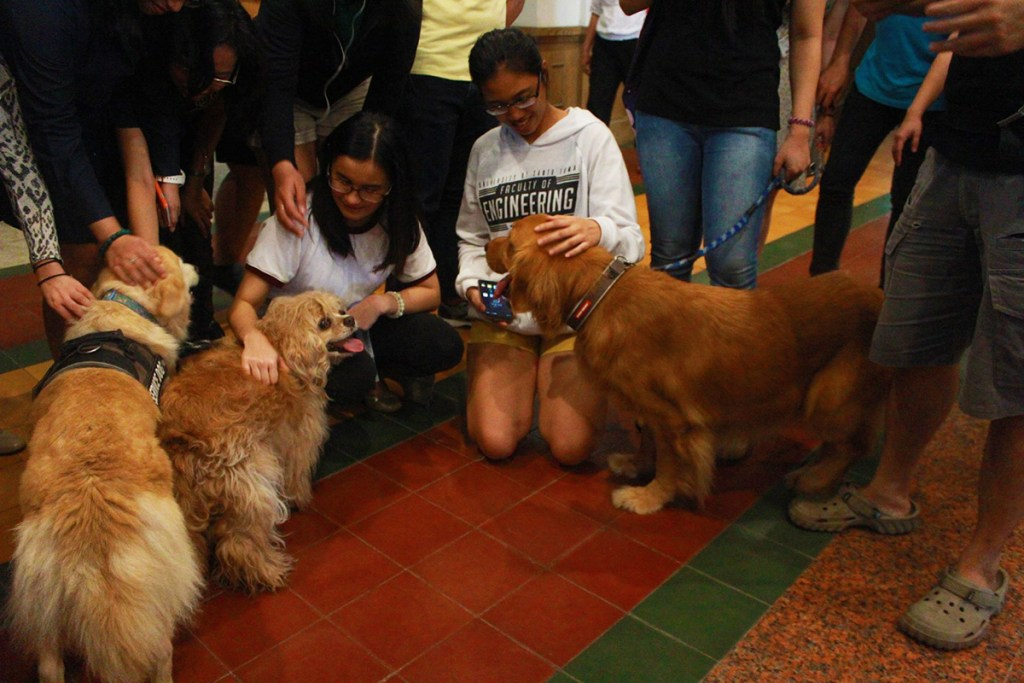 """Dogs visited and gave law students a much-needed break during UP LSG's """"Are You Having A Ruff Time?"""" (Photo courtesy of UP LSG)"""
