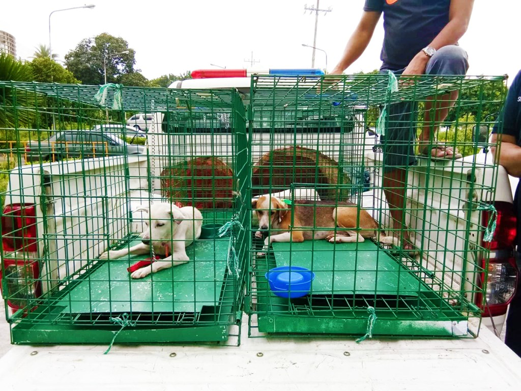 Six dogs were neutered from the UPDP during the Aug. 19 FOCA/IWCT neutering activity at the Institute of Biology. Photo by Khrysta Rara