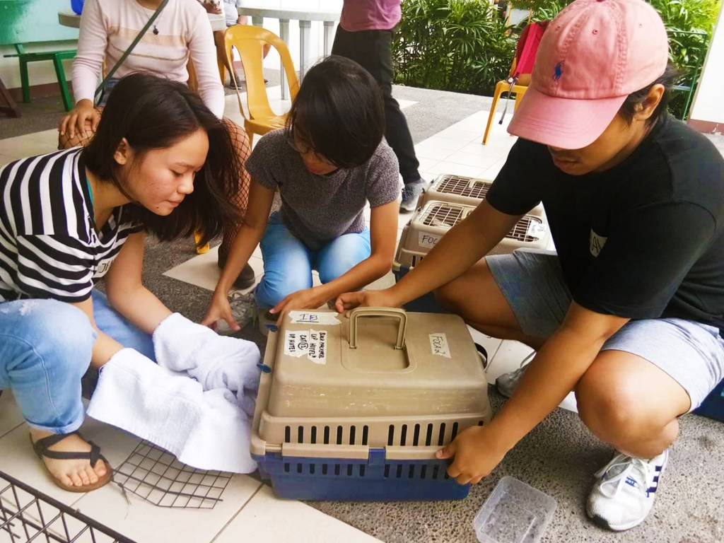 FOCA student-volunteers help the cats relax during the Aug. 19 FOCA/IWCT neutering activity. (Photo by Khrysta Rara)