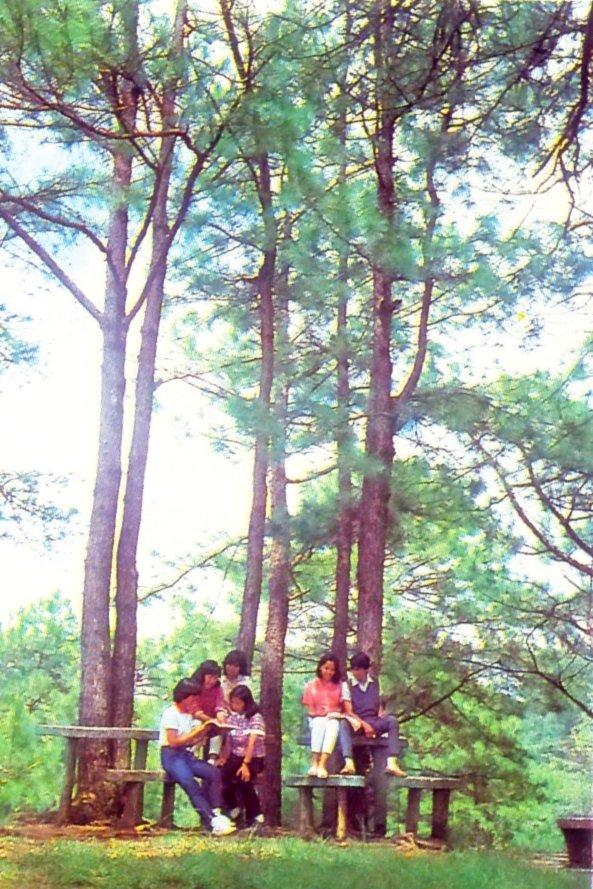 Old photo of UP Baguio, showing greenery integral to a healthy life on campus. (Photo from UP MPRO files)